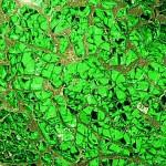 Sg-06 Green