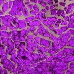 Sg-10 Lilac