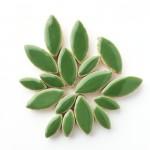 Bb-14 Eucalyptus